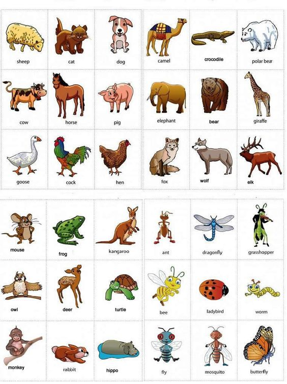 vocab-animals